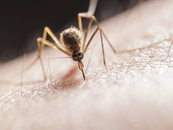 Picaduras mosquitos (II)_Farmacia I+
